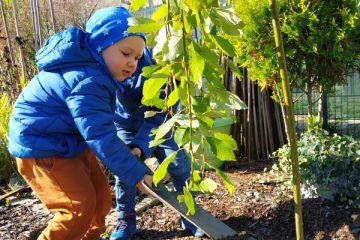 dzień drzewa w Biedronkach