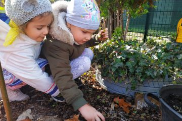 Jesienne porządki w ogrodzie Biedronek